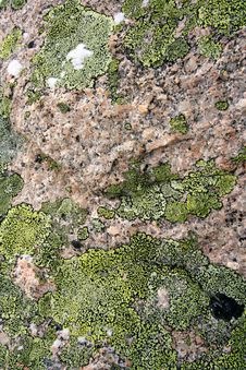Free Texture Mossy Granite Royalty Free Stock Photos - 1981608