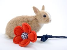 Free Baby Bunny With Red Flower Stock Images - 1981704