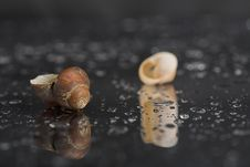 Free Still Life With Two Shells. Royalty Free Stock Images - 1983569