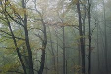 Free Autumnal... Royalty Free Stock Images - 1984689