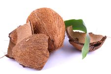Free Coconut Royalty Free Stock Photography - 1986967
