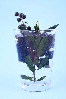 Free Water Currant Stock Photo - 1987230