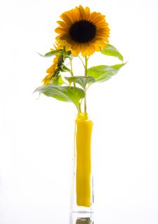 Free Flower Stock Photo - 1987910