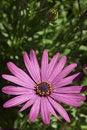 Free Purple Flower Stock Image - 19800171