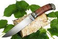 Free The Hunting Knife Stock Photos - 19806613