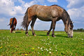 Free Horses On A Summer Pasture Stock Image - 19807891