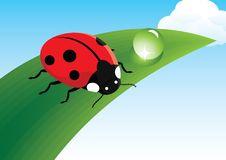 Free Ladybug Royalty Free Stock Photos - 19800228