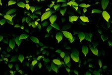 Free Green Leaves Background Stock Image - 19800321