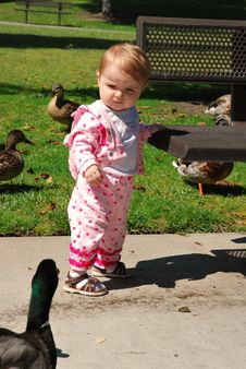 Free Toddler And Duck Have A Stare Down Stock Photo - 19800430
