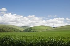 Free Wheat Fields And Hills Stock Photo - 19800620