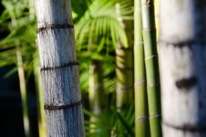 Free Bamboo Grove Royalty Free Stock Images - 19801739