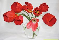 Free Red Tulips In Glass Vase Royalty Free Stock Images - 19801849