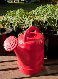 Free Red Watering Can Stock Photography - 19801922