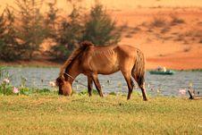 Free Horse Stock Photos - 19802283