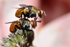 Two Flies Royalty Free Stock Photography