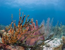 Coral Gardens Stock Images