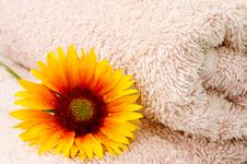 Free Towel And Flower Stock Images - 19805964