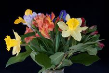 Free Spring Flowers Royalty Free Stock Image - 19806276