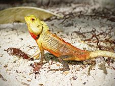 Green Lizard In The Sand Stock Photo