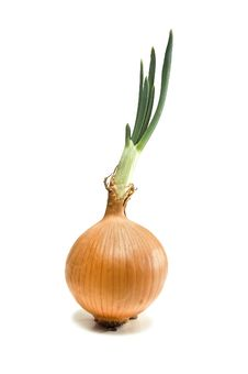 Free Onion Royalty Free Stock Photography - 19806537