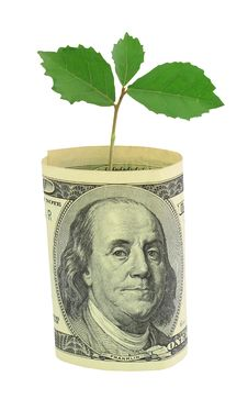 Free Tree Growing From Dollar Bill Stock Photo - 19807040