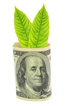 Free Tree Growing From Dollar Bill Royalty Free Stock Photos - 19807058