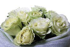 Free Beautiful Roses Stock Image - 19807651