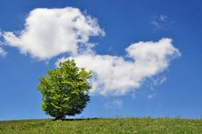 Lonely Tree Against The Huge Sky With A Cloud Royalty Free Stock Image