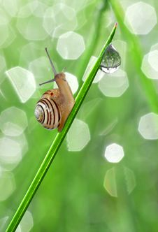 Snail On Dewy Grass Royalty Free Stock Image