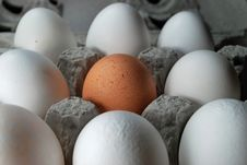 One Brown Egg Royalty Free Stock Photography