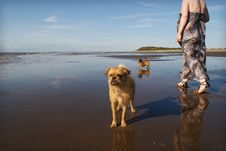 Free 2 Dogs On Beach Woman Walking Stock Image - 19808901