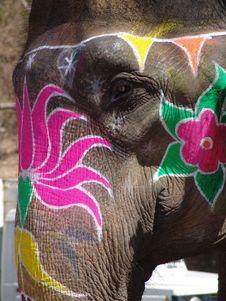 Free Elephant, Jaipur, India Stock Photo - 19809940