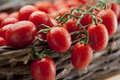 Free Ripe Vine Tomatoes Stock Photo - 19811940
