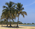 Free Coconut Palms On Caribbean Beach Stock Images - 19813544
