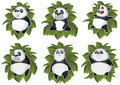 Free Pandas Isolated In The Leaves Royalty Free Stock Photo - 19814485