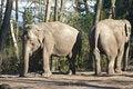 Free Elephants Stock Photography - 19818832