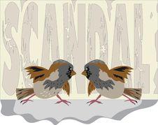 Free Sparrow 2 Stock Photos - 19810173