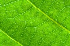 Free Green Leaf Texture Stock Images - 19811244