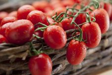 Free Ripe Vine Tomatoes Stock Photo - 19811940