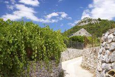 Free Croatia: Elafiti Islands Royalty Free Stock Photos - 19812688
