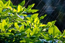 Free Bush In The Rain Stock Image - 19813141
