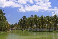 Free Islet With Palms And Foot-bridge In Park Royalty Free Stock Photography - 19813537