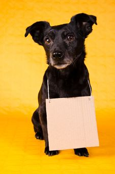 Happy Black Terrier Stock Images