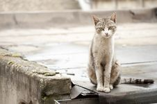 Free Abandoned Pet Royalty Free Stock Images - 19814739