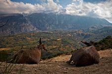 Free Donkeys Admire Landscape Stock Photos - 19815153