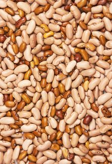 Free Beans Background Stock Image - 19815471
