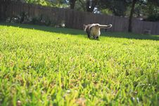 Free Cat On Grassy Lawn Royalty Free Stock Images - 19816499