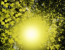 Free Sun In Forest Stock Image - 19818071