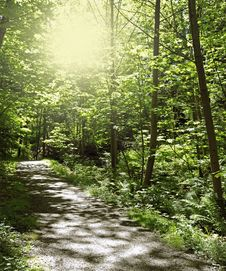 Free Path In Forest Royalty Free Stock Photo - 19818105