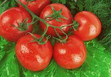 Free Tomato Stock Images - 19818454
